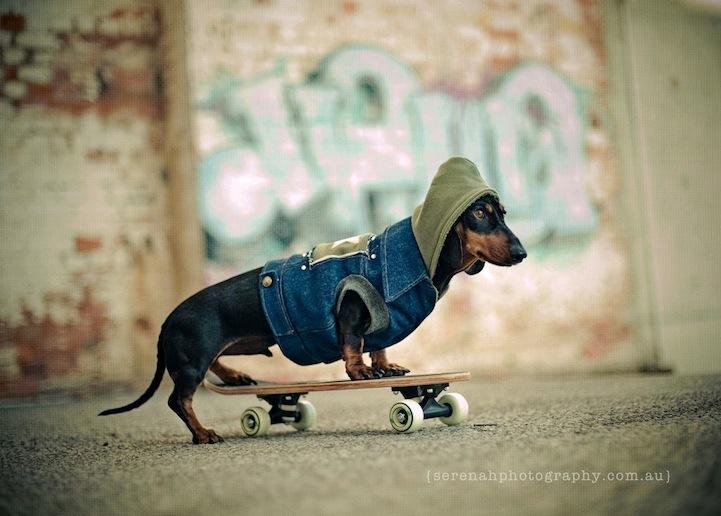 """Comparador clases de skate """"Rastrea-Skater"""""""